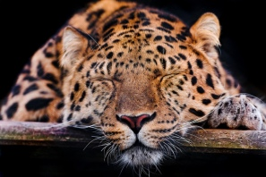 """Interpreting SNA feels like telling """"just so"""" stories about how leopard got its spots. Or is it just me:)"""